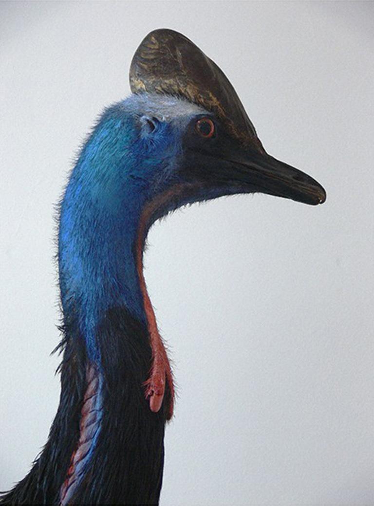 Basim Magdy Cassowarius Rex 2015
